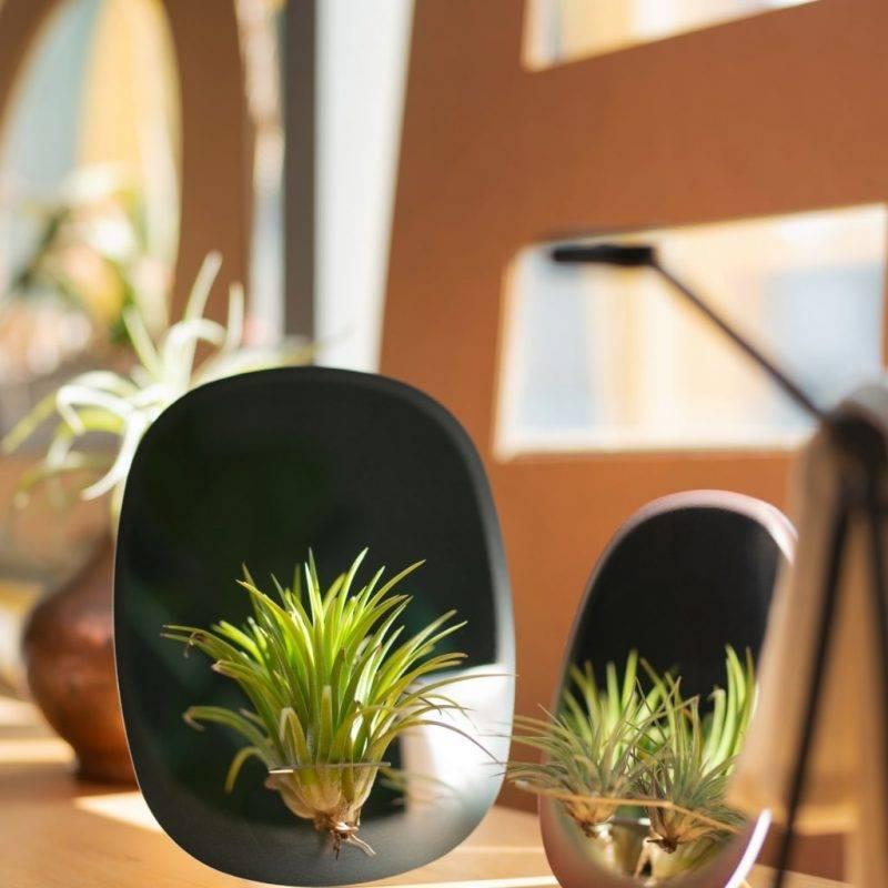 Rectangular Blue Plant Mirror Home & Garden Home Goods